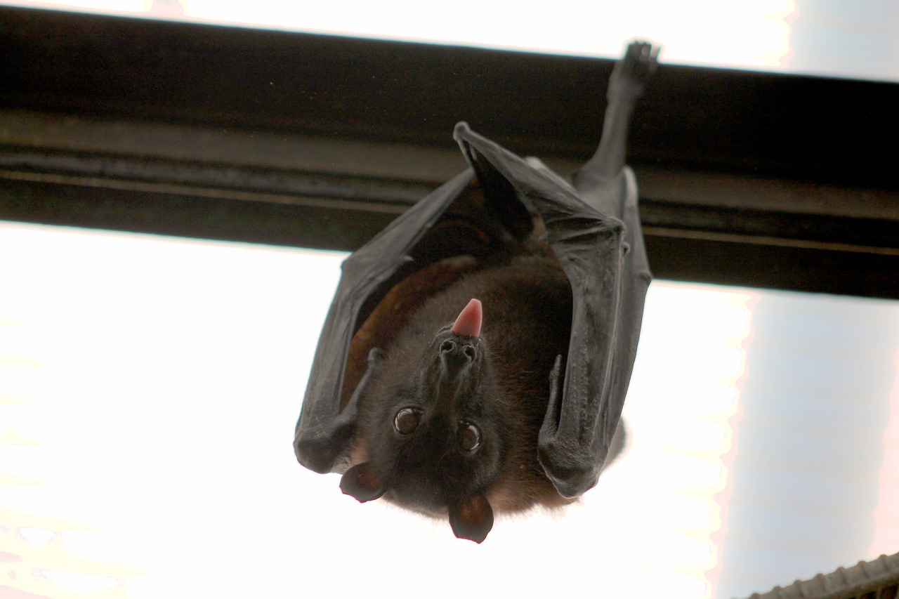 Are Bats Actually Blind