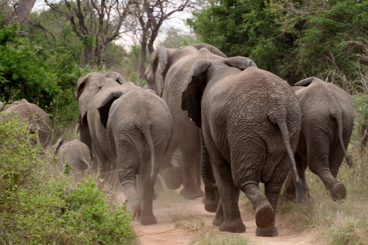 Are Elephants Afraid of Mice