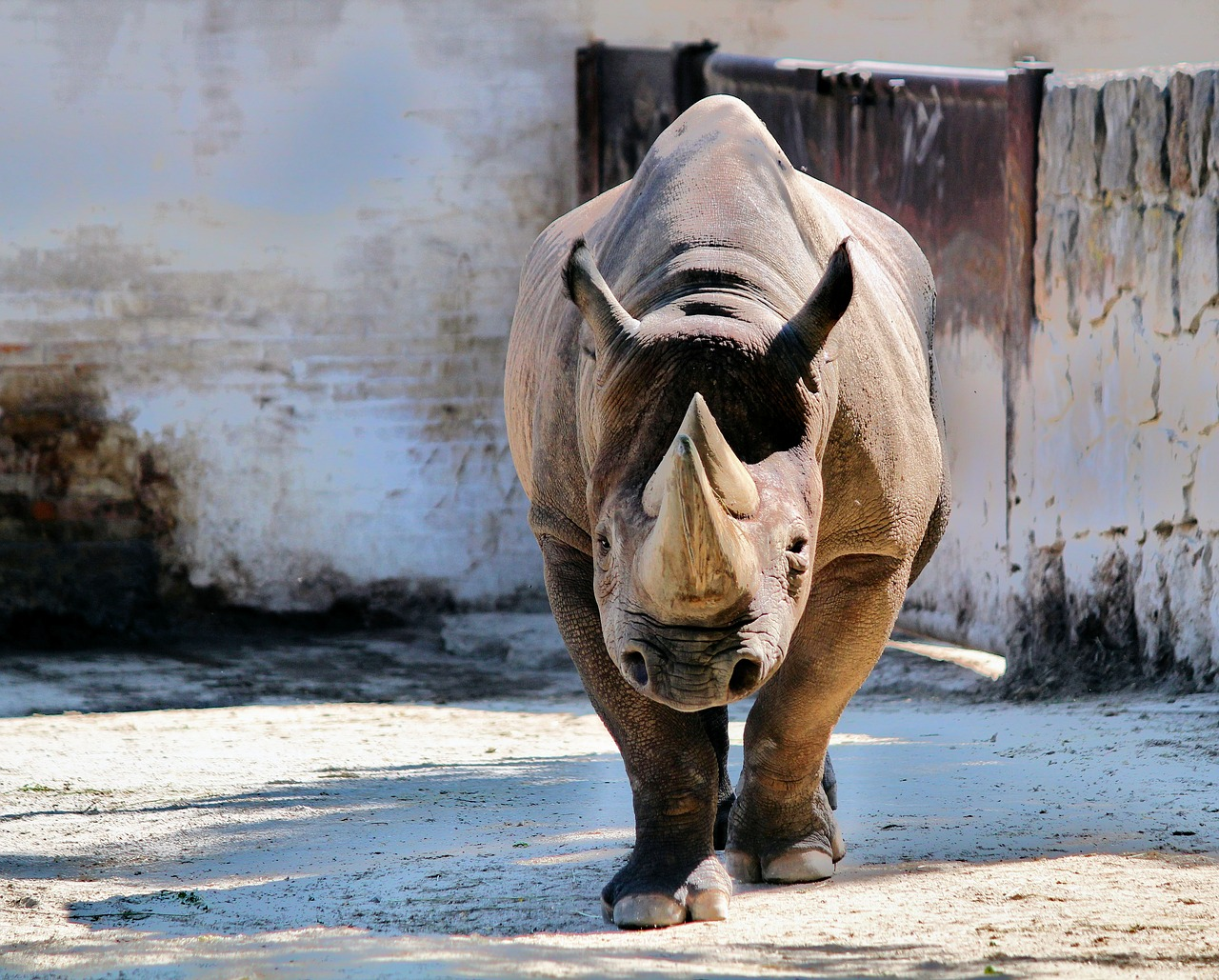 Are Rhinoceros Dangerous