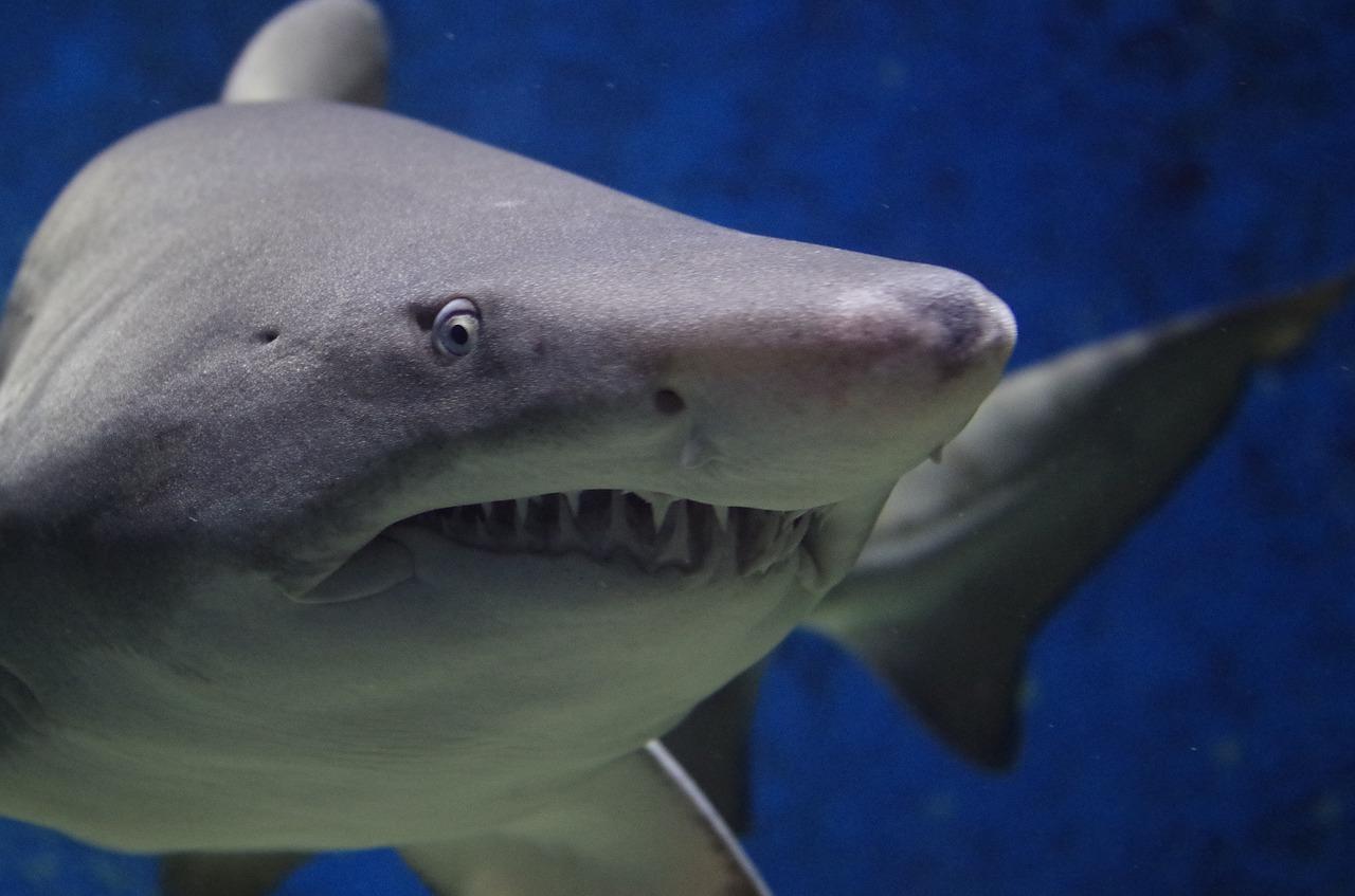 Are Sharks Dangerous
