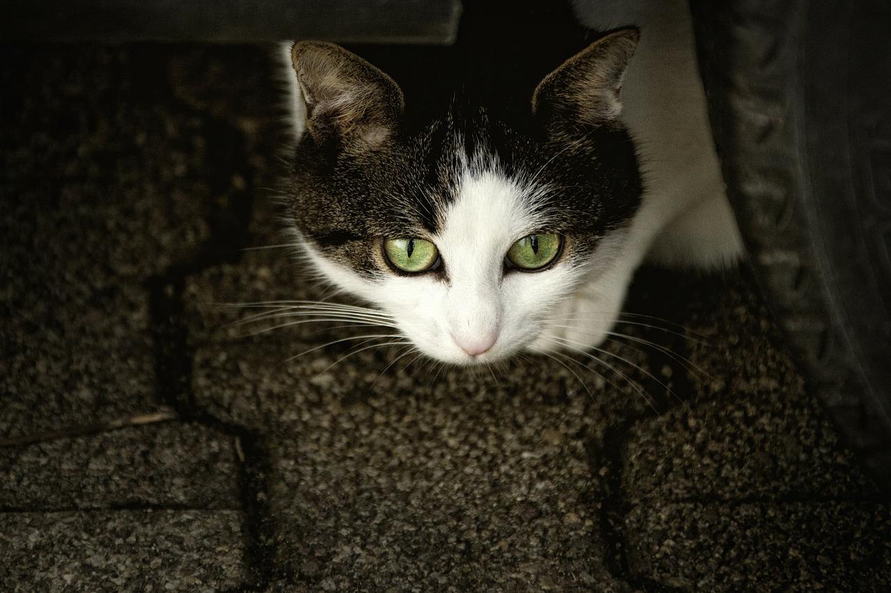 Do Animals' Eyes Shine in the Dark