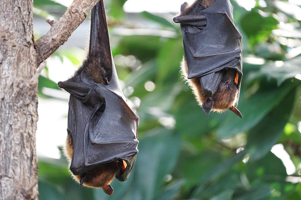 Do Vampire Bats Really Exist