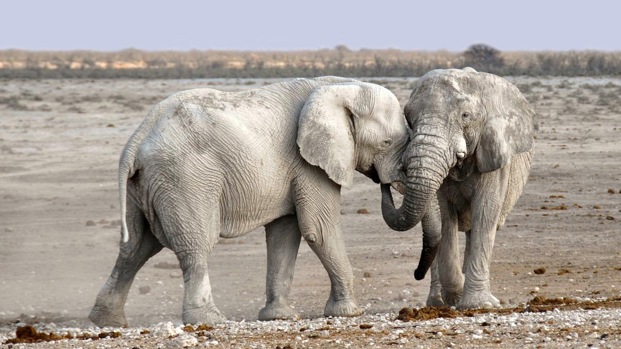 Do White Elephants Exist