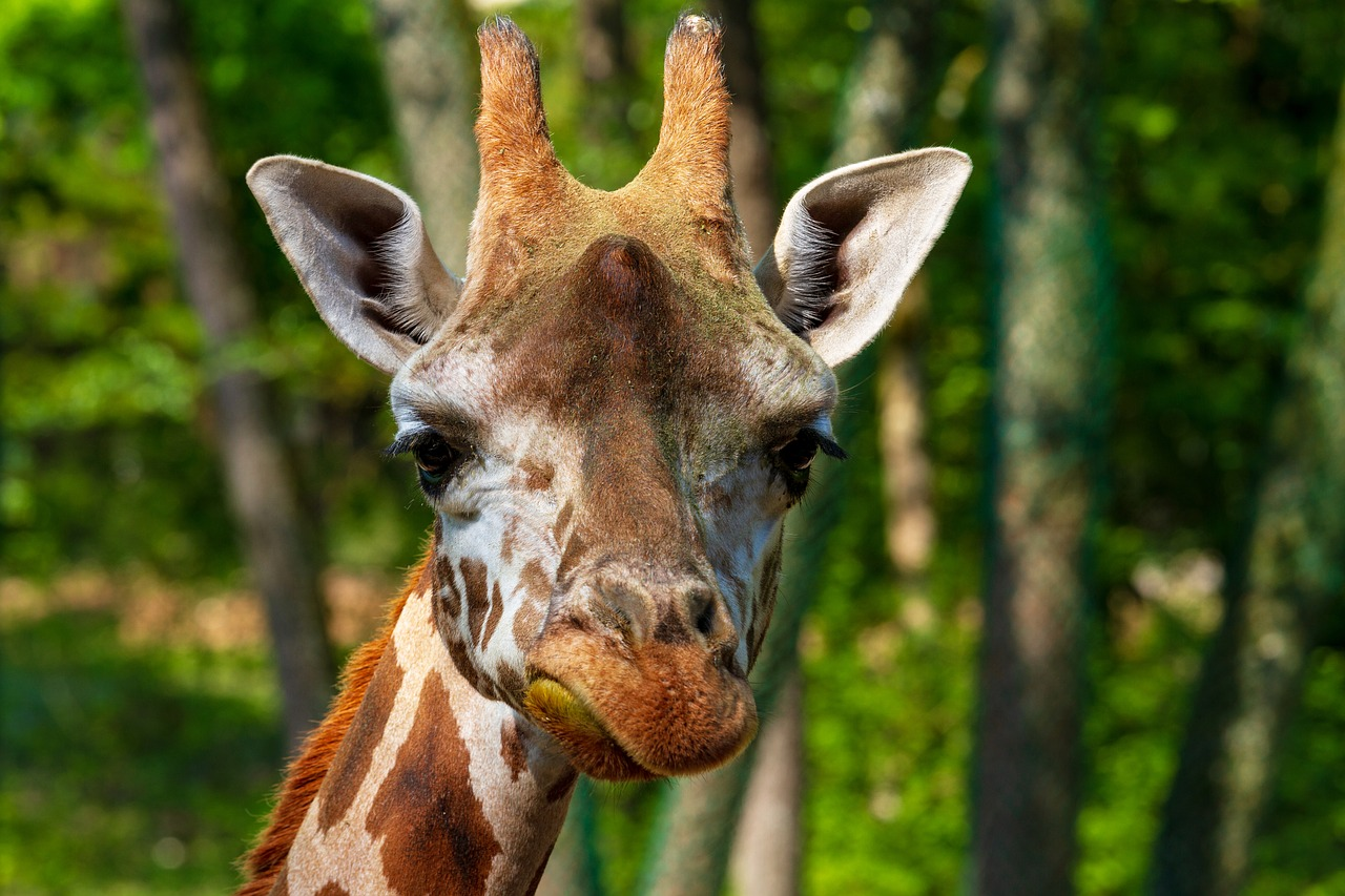 Does the Giraffe Have a Voice
