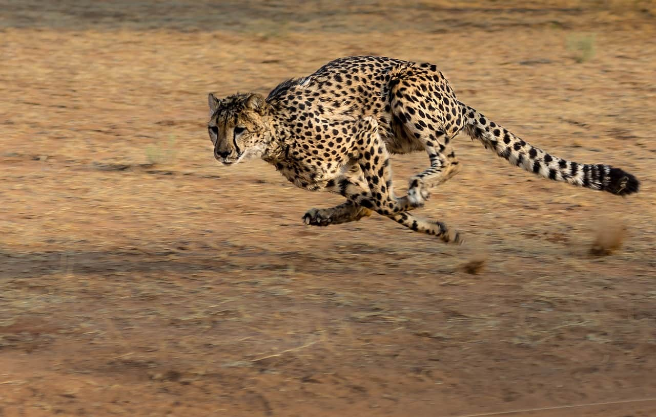 Fastest Mammal in the World