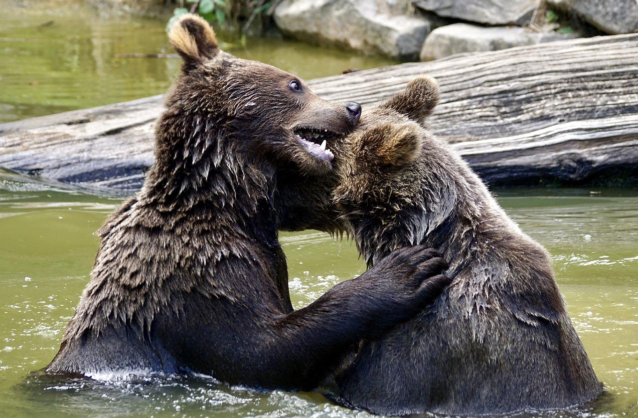 Fight between Mammals