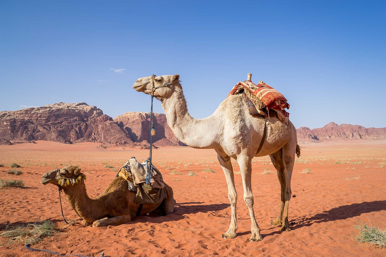 How Long Can Camels Go Without Water