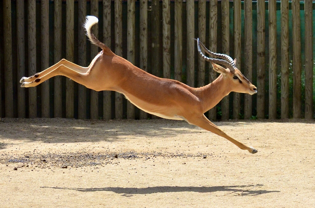 Jumping Ability of Mammals