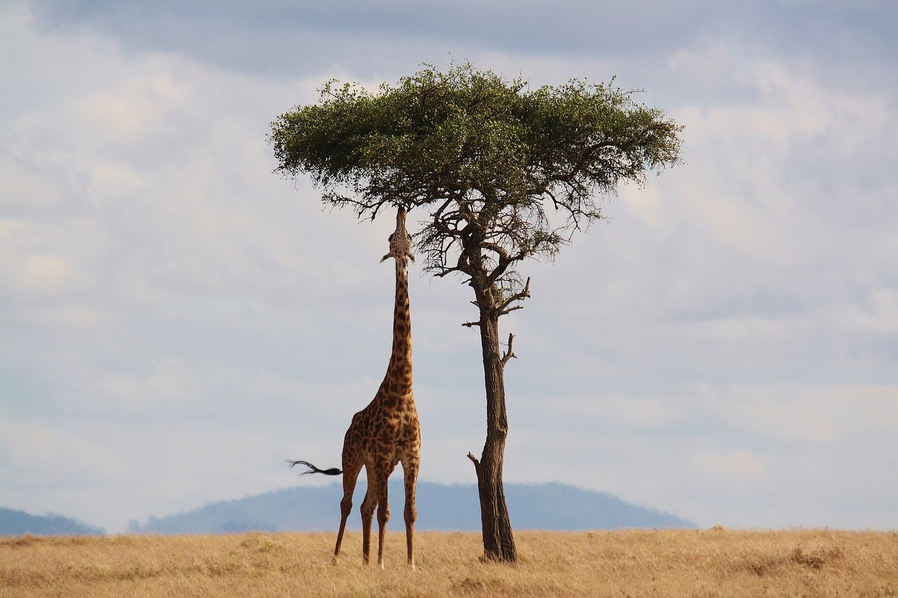 Tallest Animal in the World