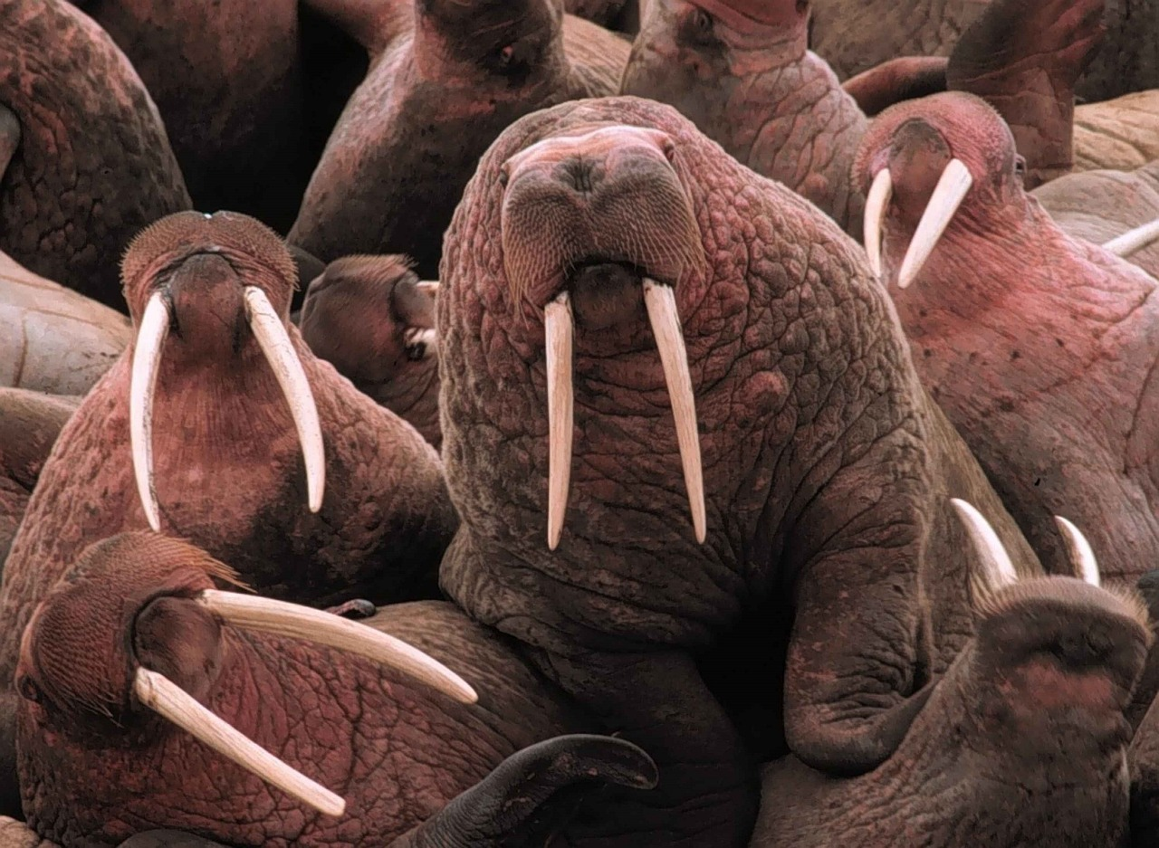 What Animals' Teeth Never Stop Growing