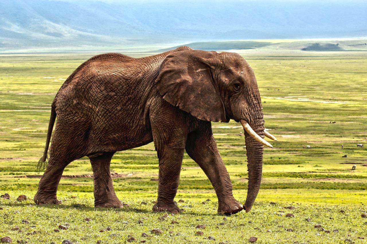What Mammal Lives Longest