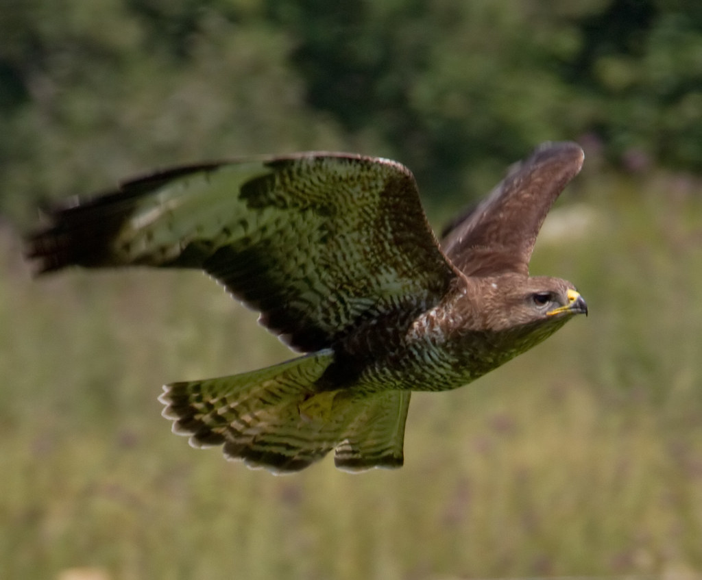 How Do Buzzards Find Dead Animals?