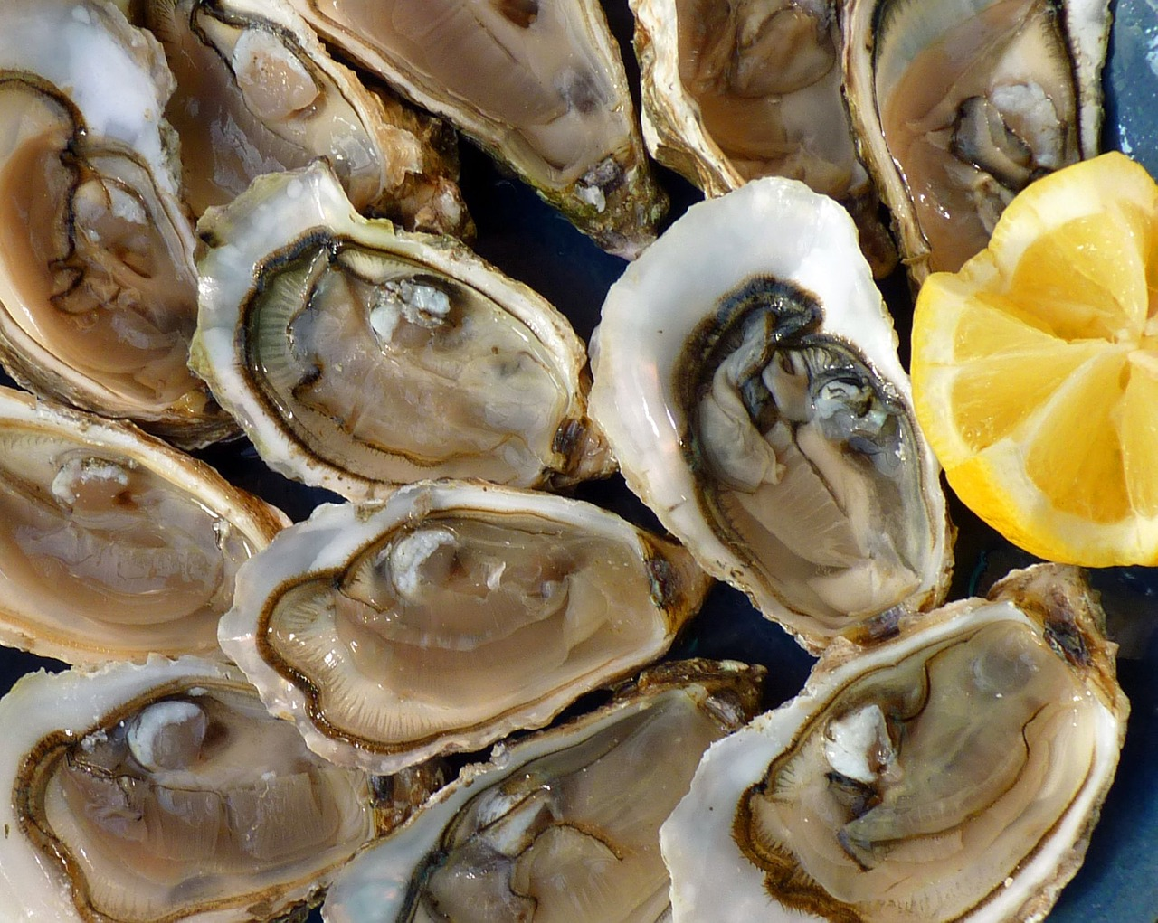 Do Oysters Feel Pain
