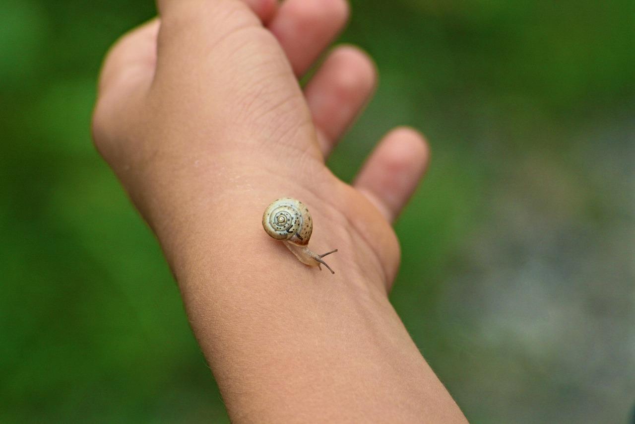 Do Snails Bite Animal Hype