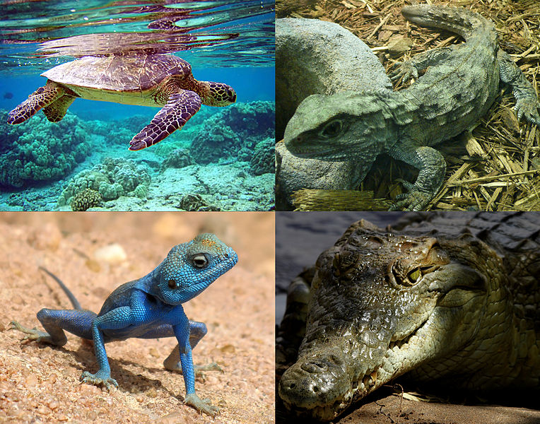 What Are Reptiles