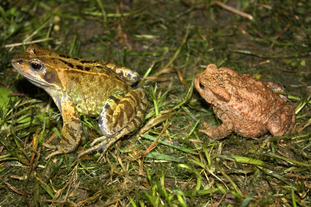 What ls the Difference Between Frogs and Toads?