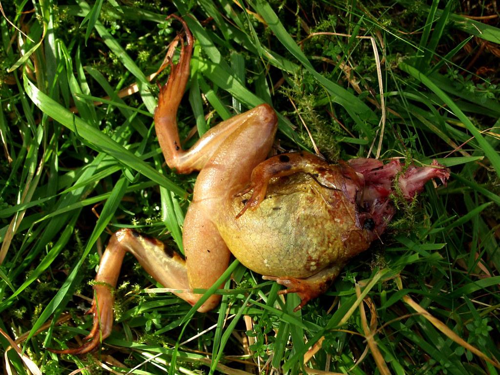 Why Do Frogs Die in Dry Air?