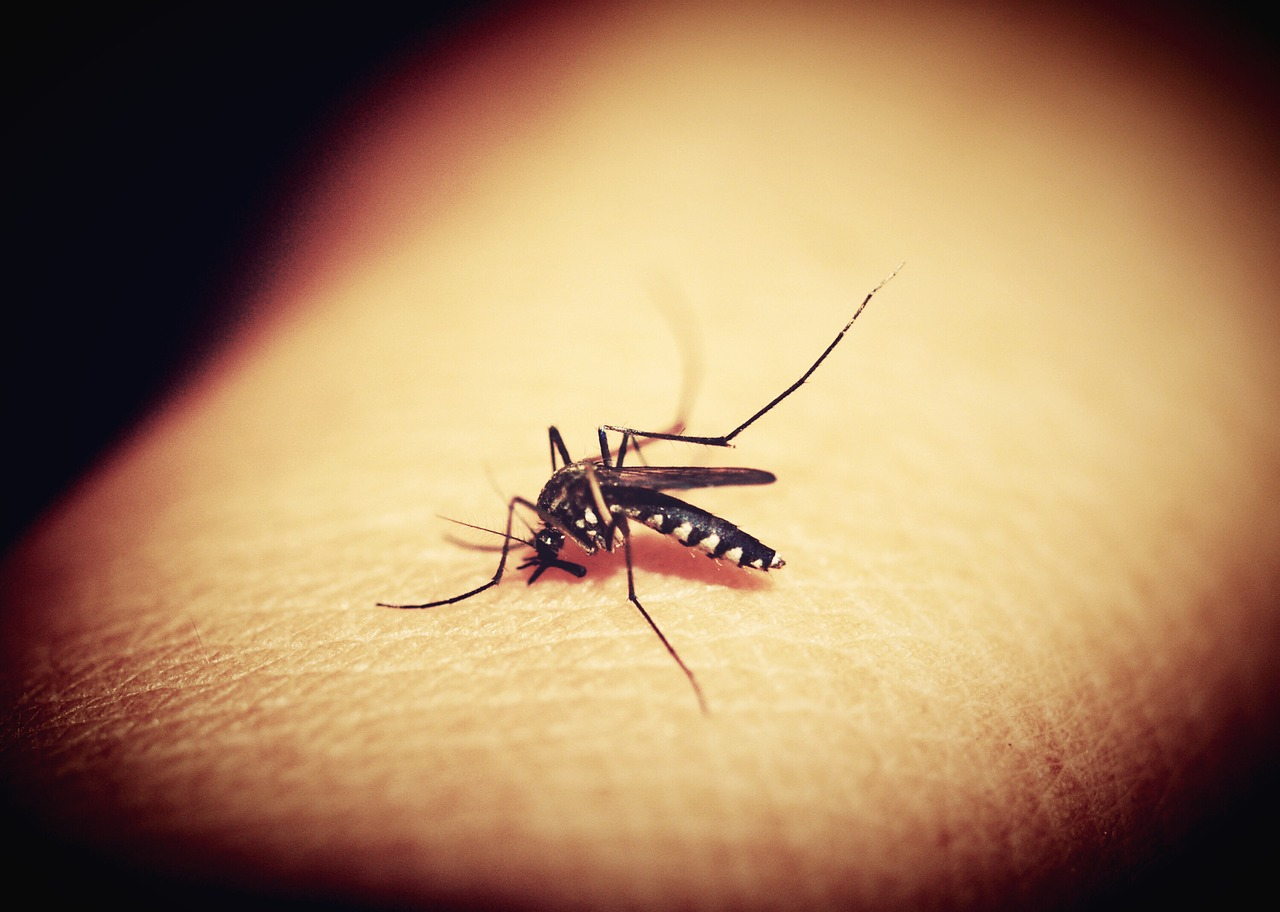 Do Mosquitoes Sleep? When and Where?