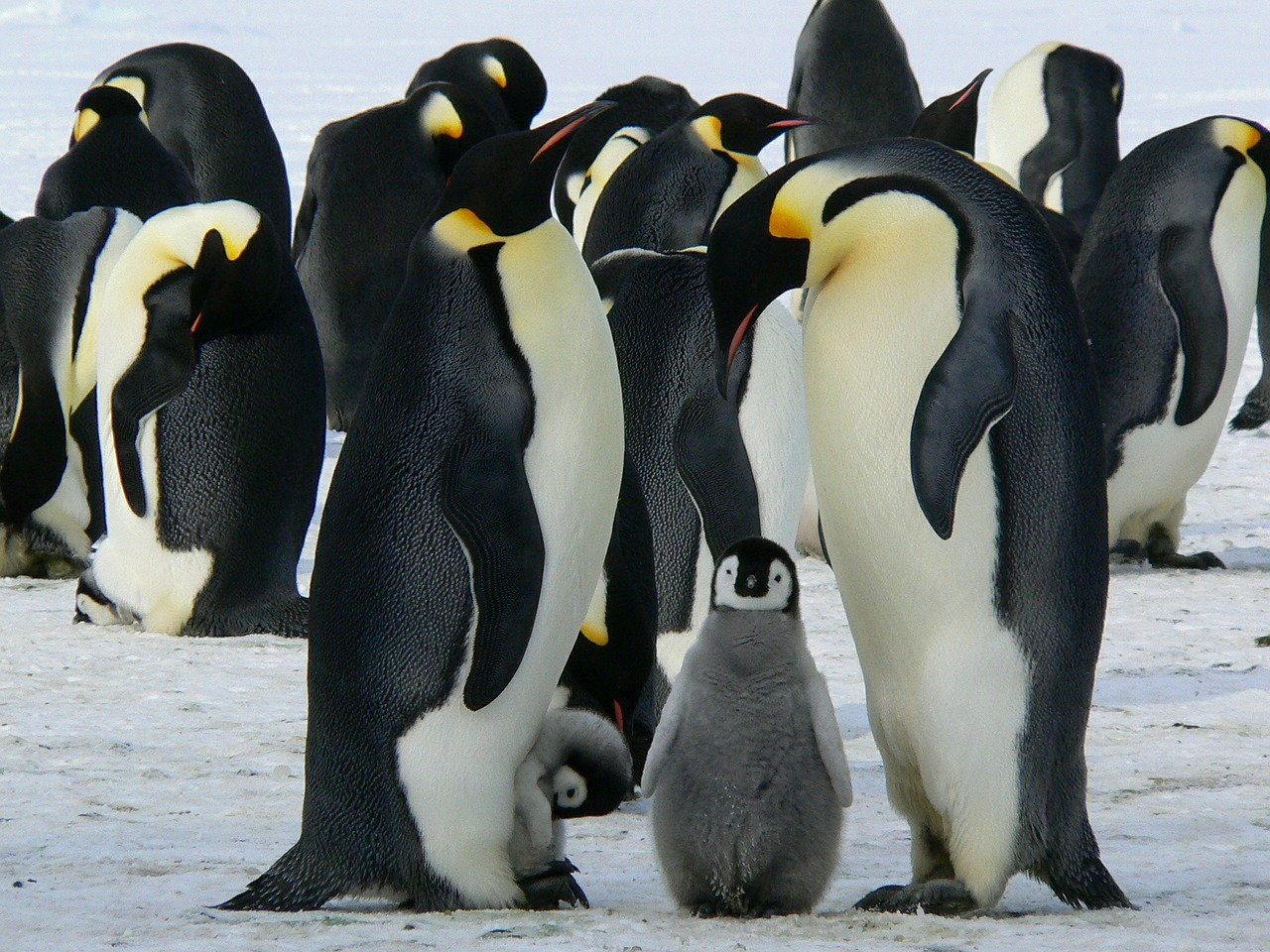 Do Penguins Have Feathers or Fur