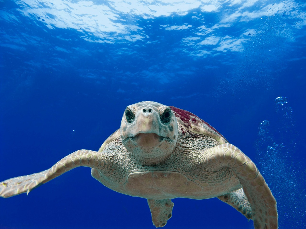 Do Sea Turtles Bite