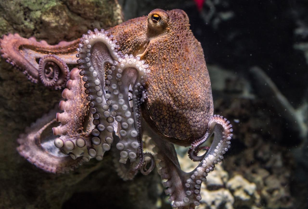 Do Octopus Have Bones