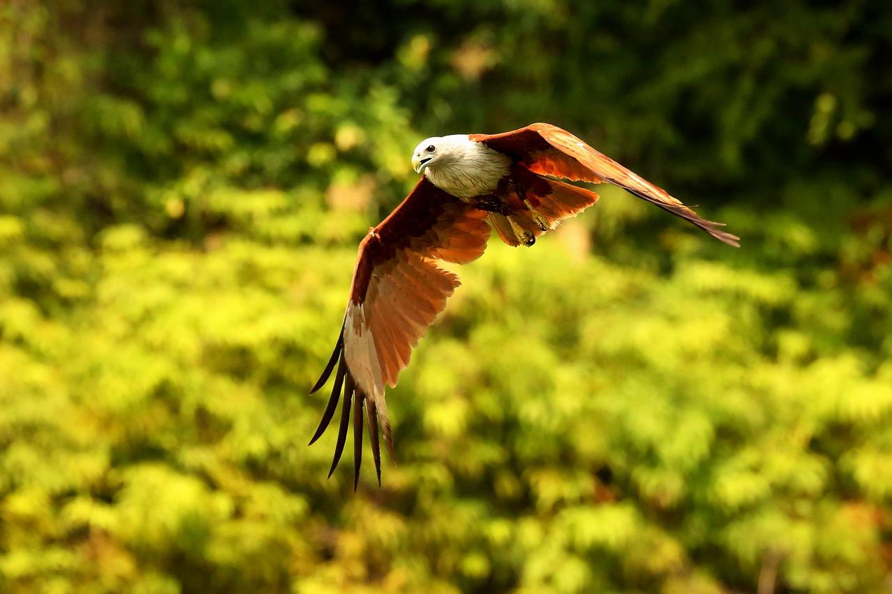 Do Hawks Hunt At Night