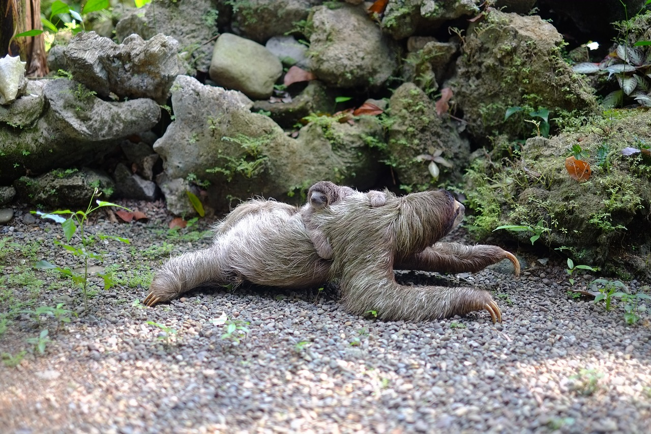 Cool Names For Female Sloths