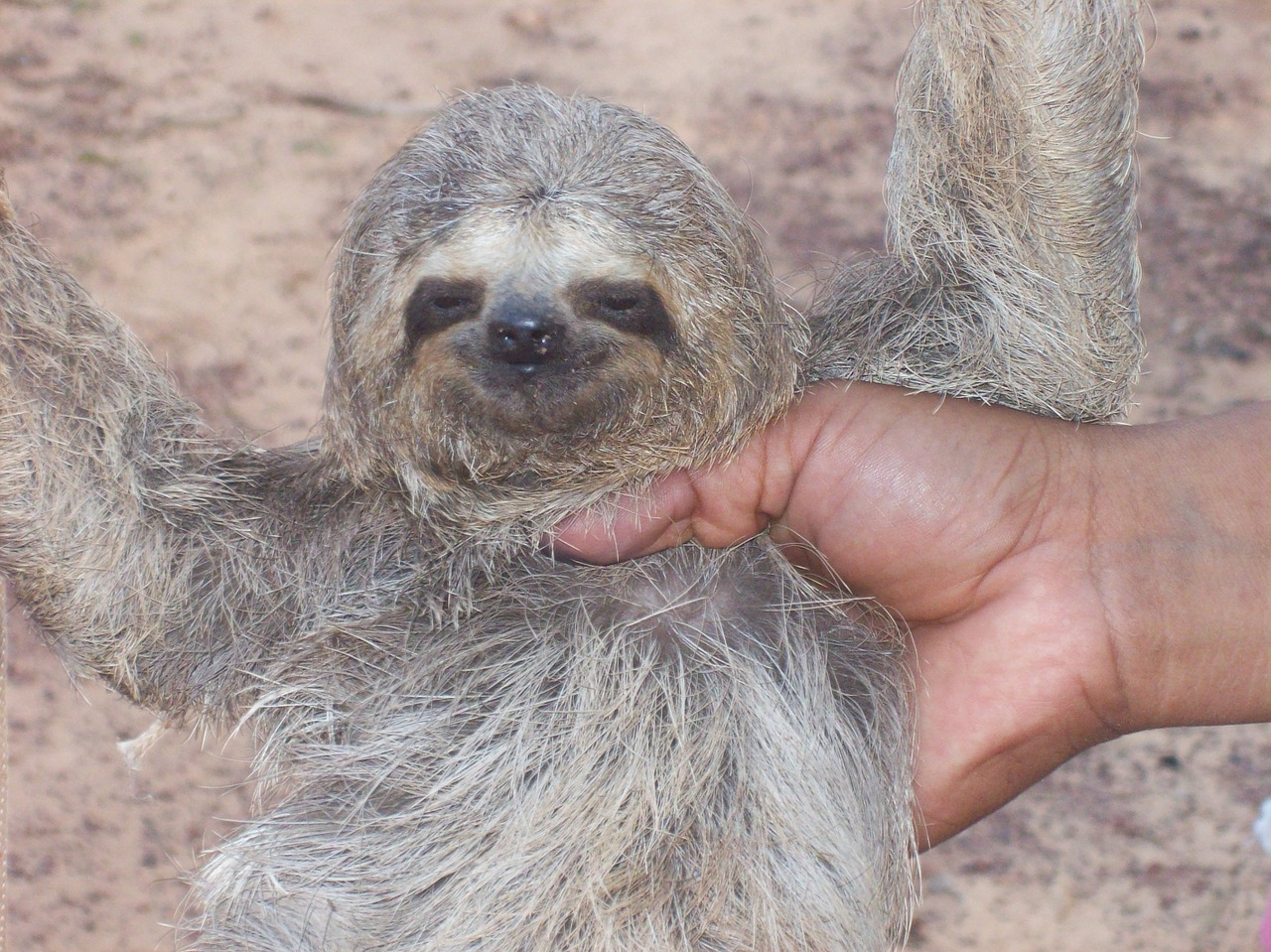 Funny Names For Sloths