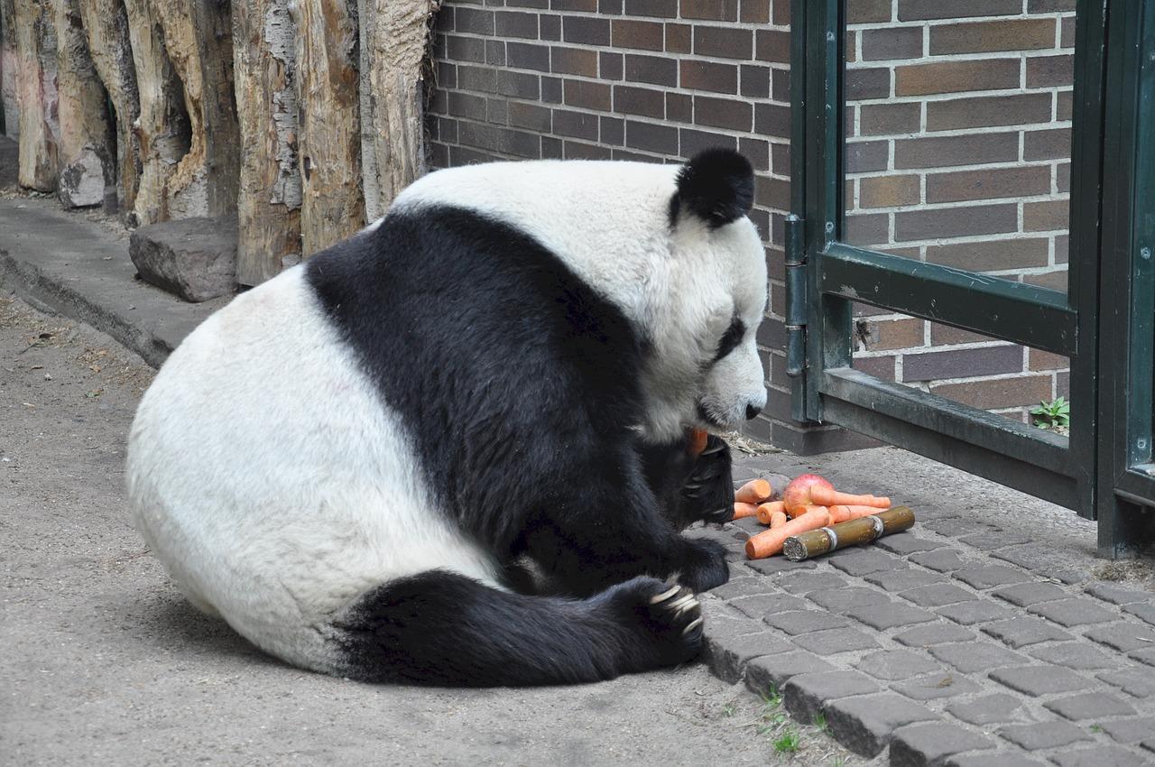 Funny Panda Names