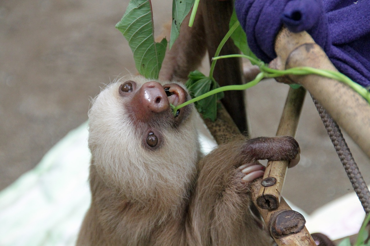 Sloth Names Inspired From Food