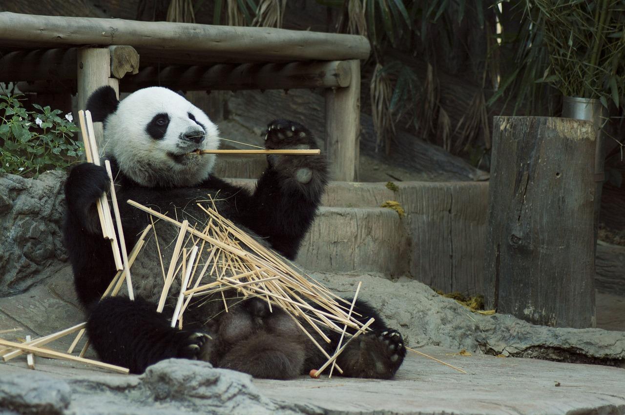 Tough Panda Names