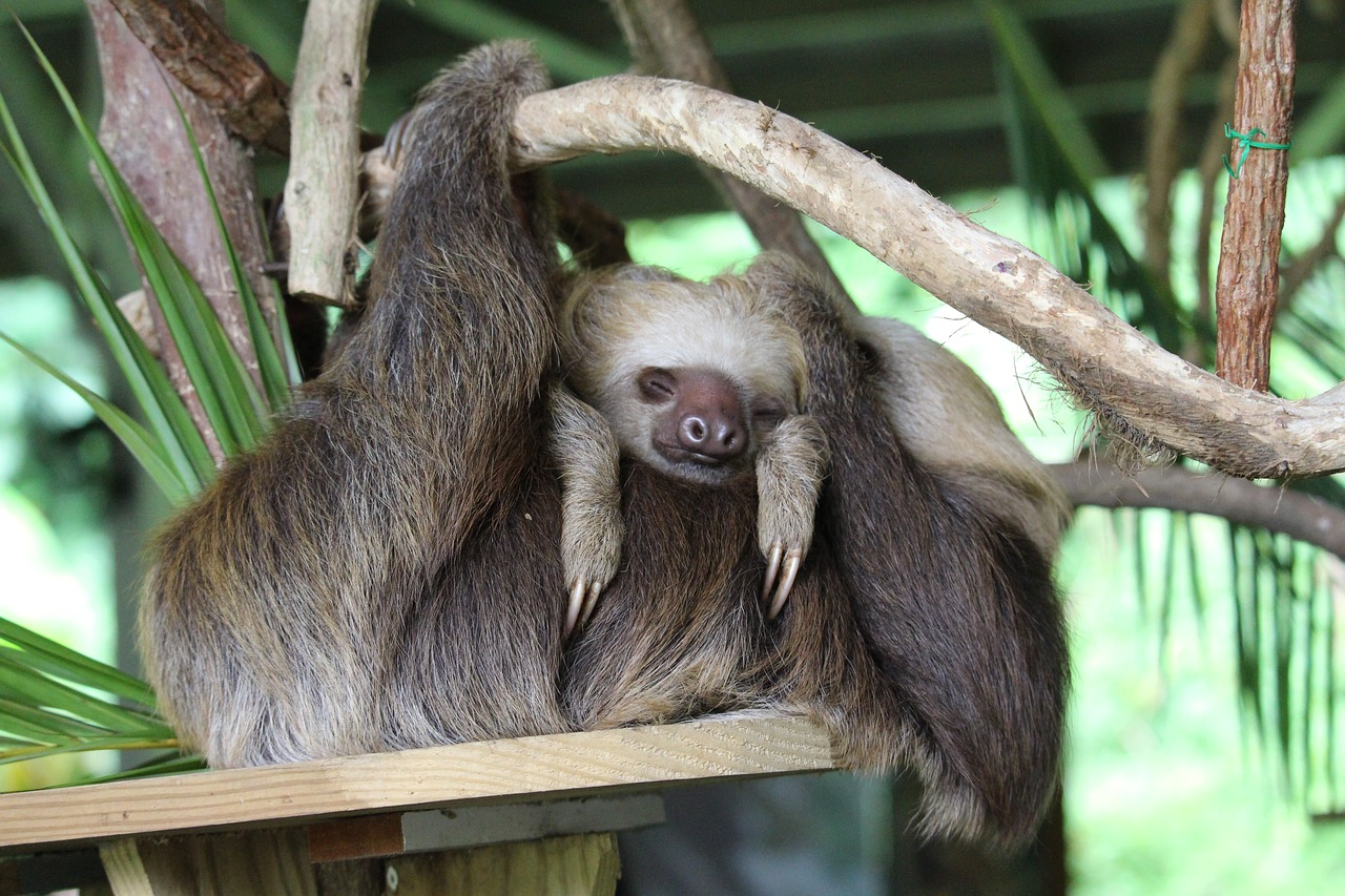 cute names for sloths