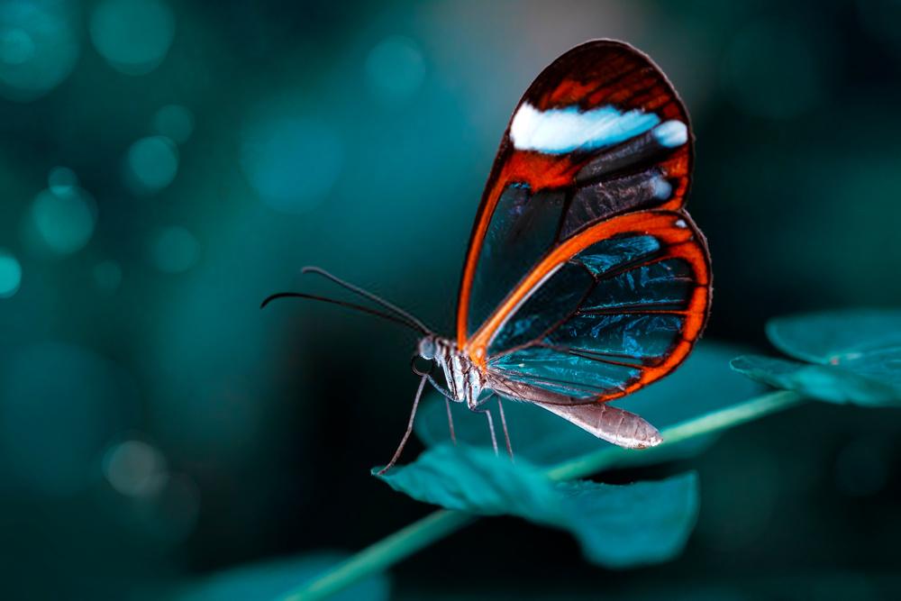 Do butterflies poop