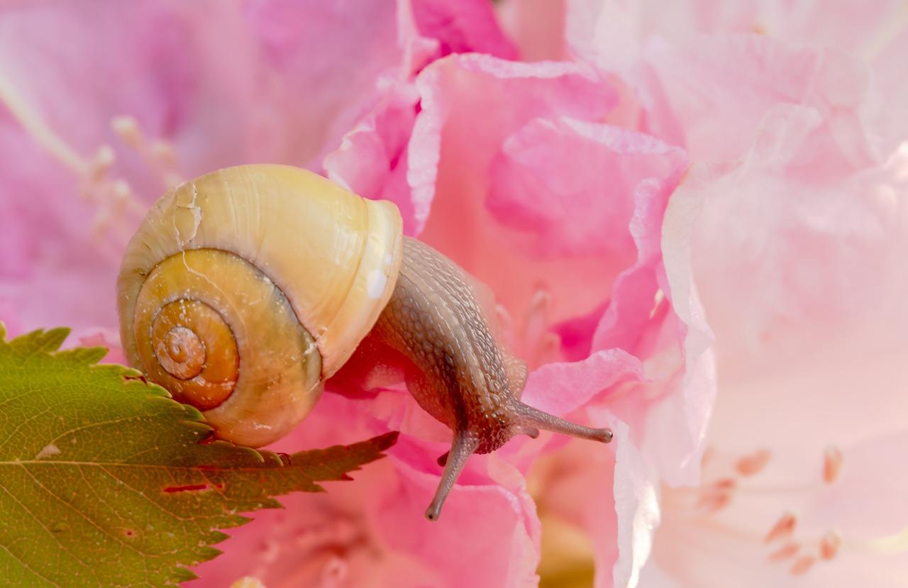 Female Snail Names