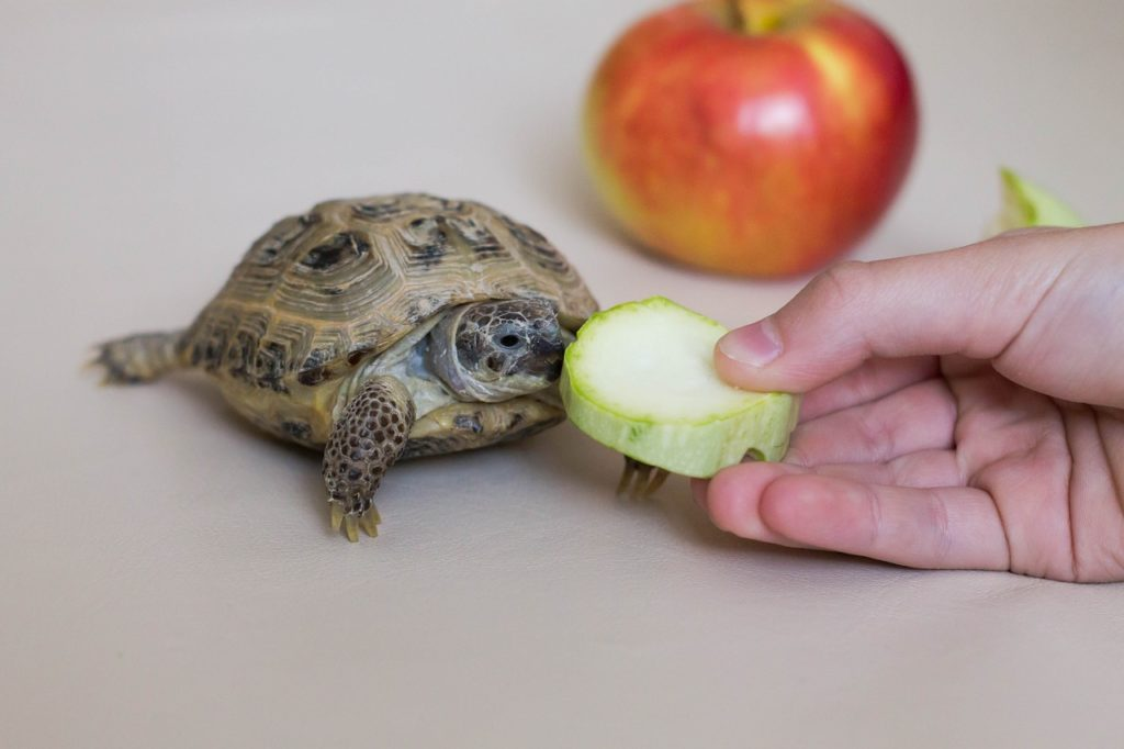 Fruits to feed tortoise