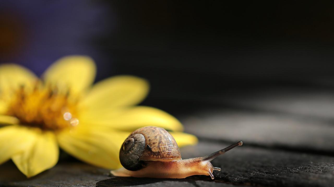 Good Snail Names