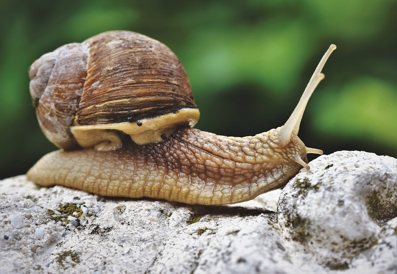 Male Snail Names