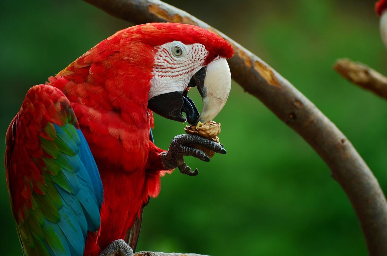 Parrot diet in wild