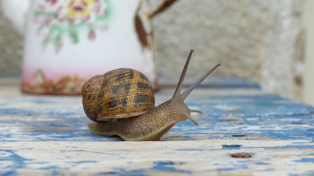Cute Snail Names