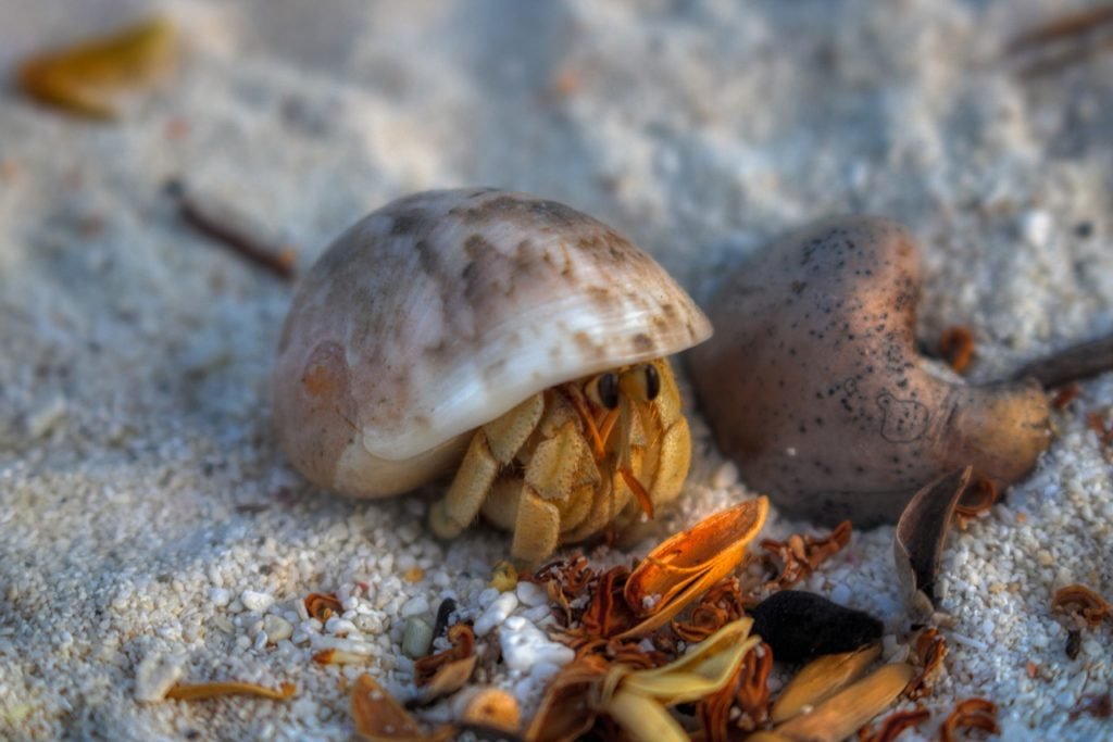 do hermit crabs sleep