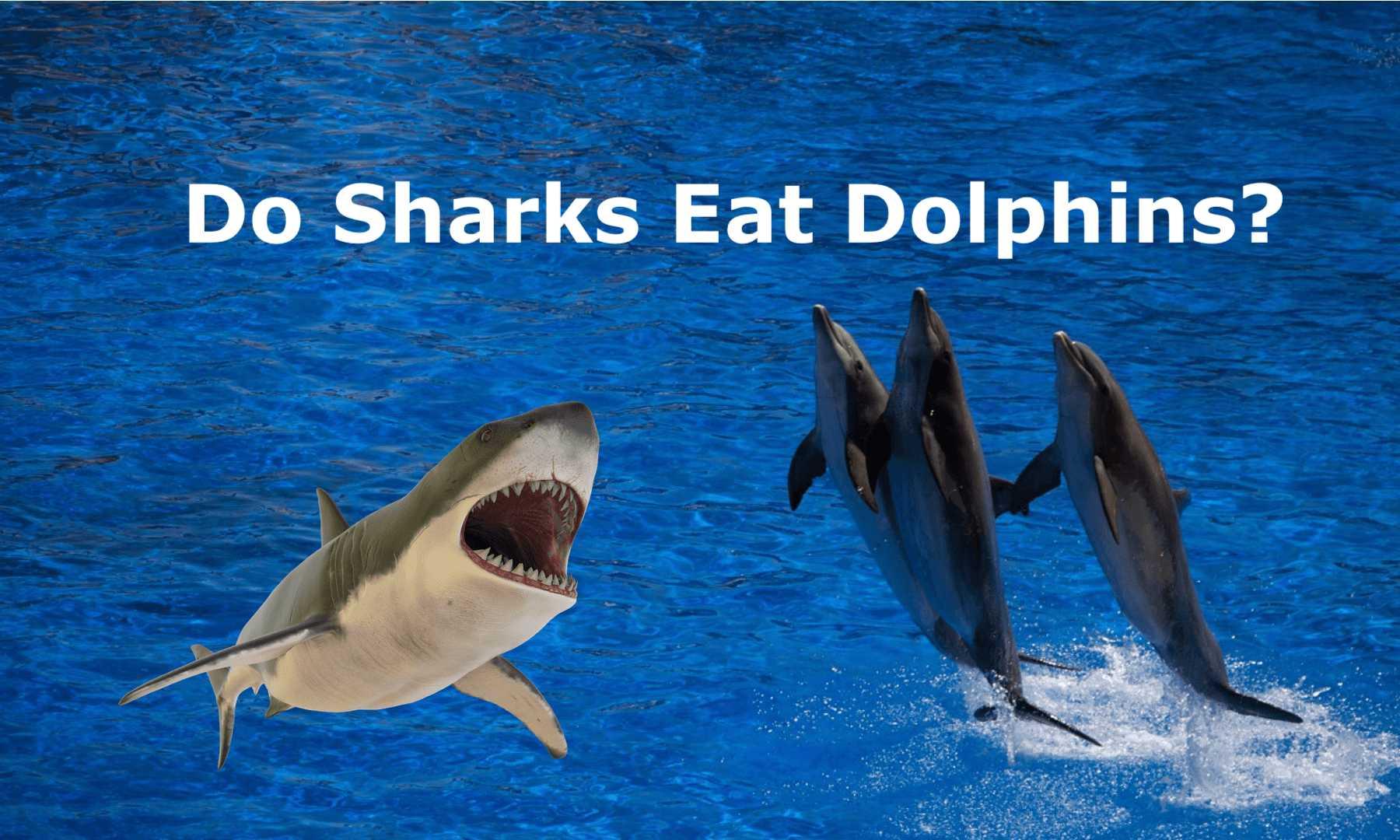 Do Sharks Eat Dolphins
