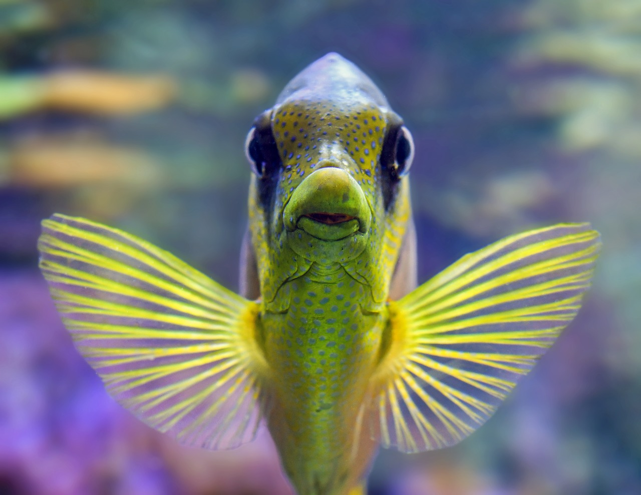 Most Exotic Aquarium Fish In The World