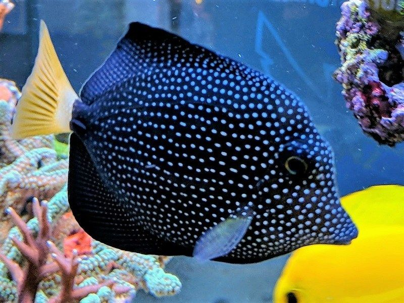 Gem Tang Exotic Fish