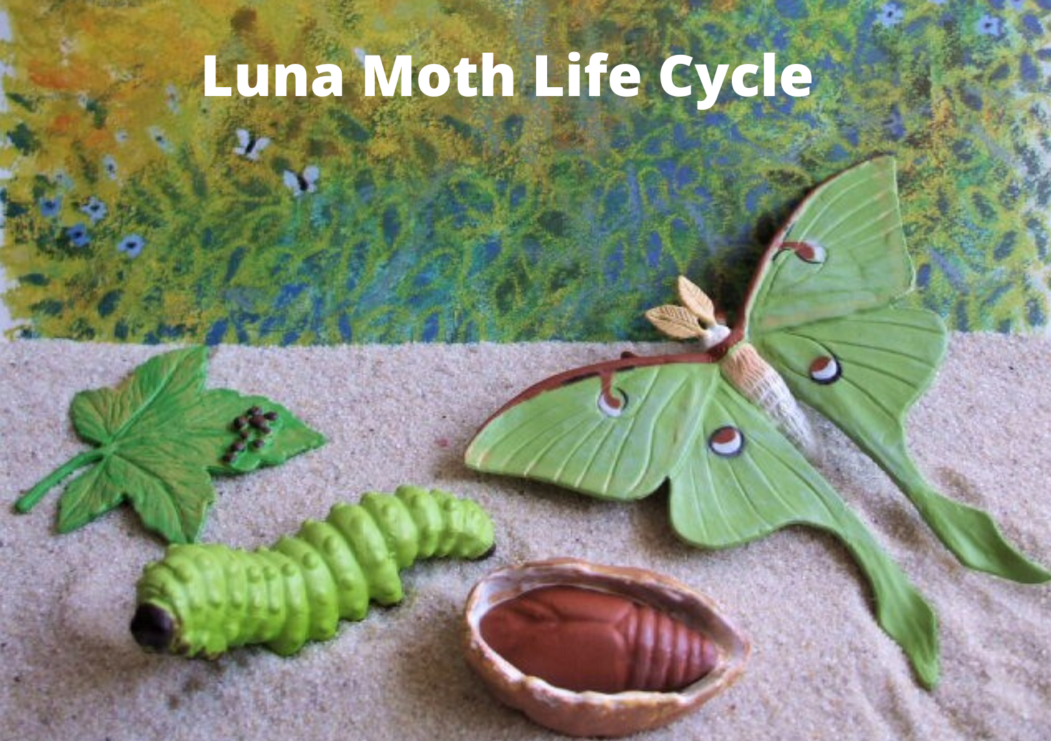 Luna Moth Life Cycle