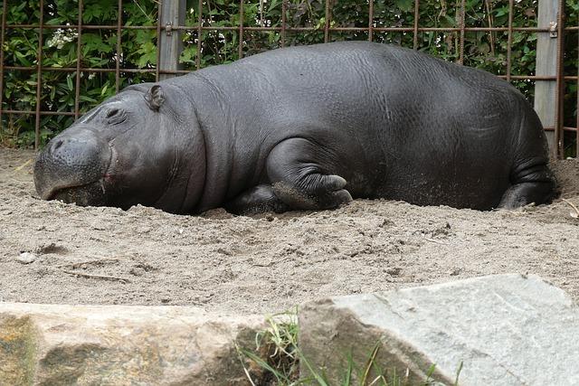 Adorable Hippo Names