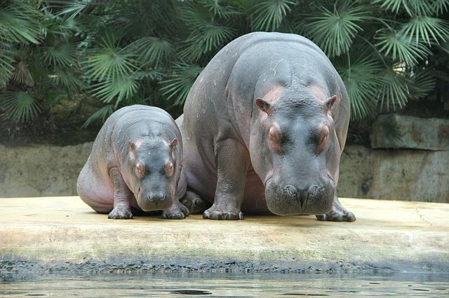 Baby Hippo Names