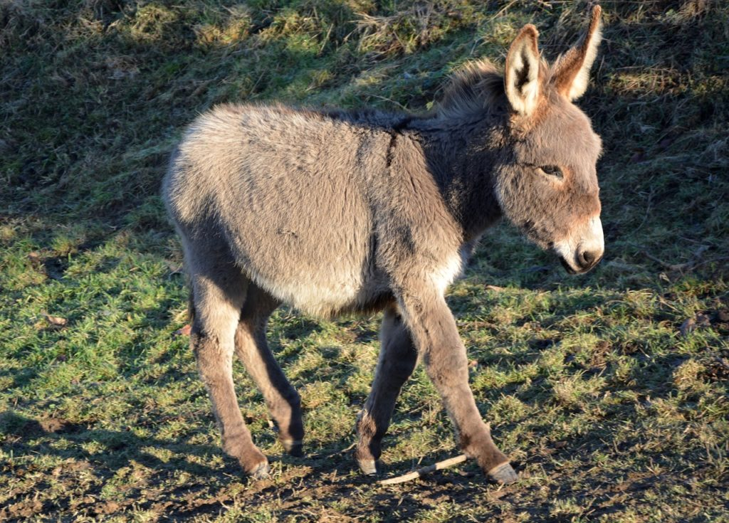 Cute Names For Baby Donkeys