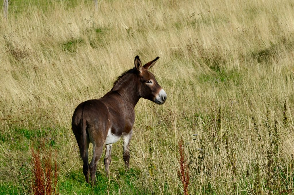 Cute Names For Female Donkeys