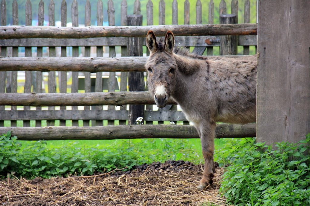 Cute Names For Male Donkeys