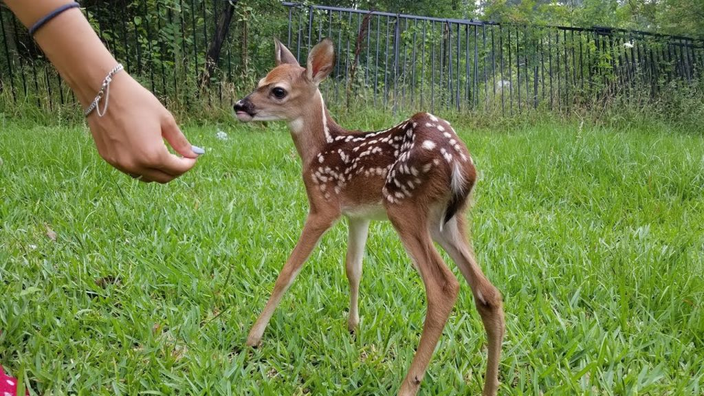 Cute Names for a Deer